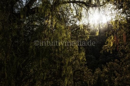 Stylisierte Naturbilder