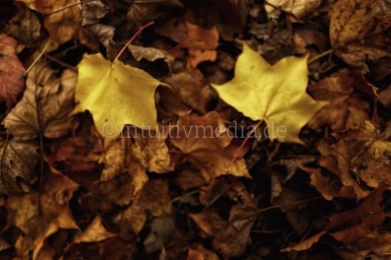 2 goldene Herbstblätter