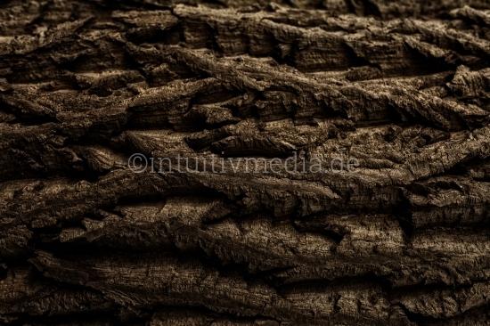 Baumrinde scharfe Struktur
