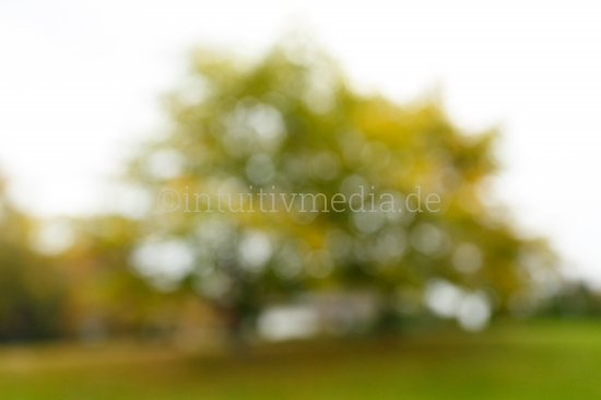 Unscharfe Bäume - Bokeh