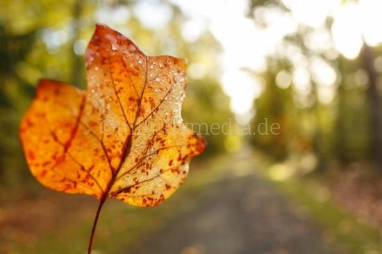 Herbstbaltt mit Unschärfe