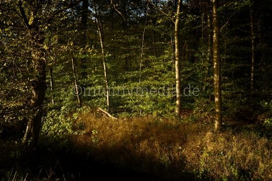 Sonnenlicht streift den Wald