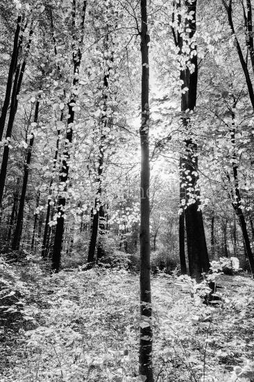 Schwarz-weiß Foto im Wald