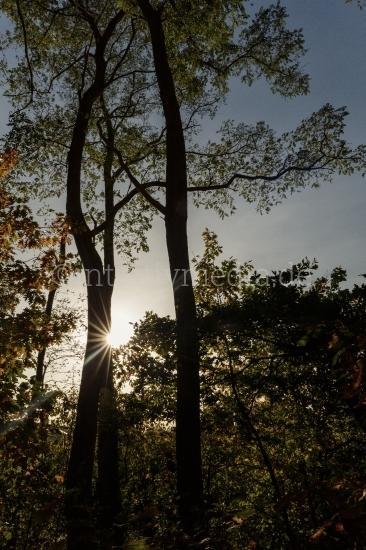 Schöne Baumstämme mit Gegenlicht