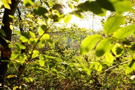 Viele grüne Blätter