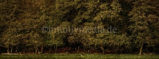 Waldrand Panorama im Herbst