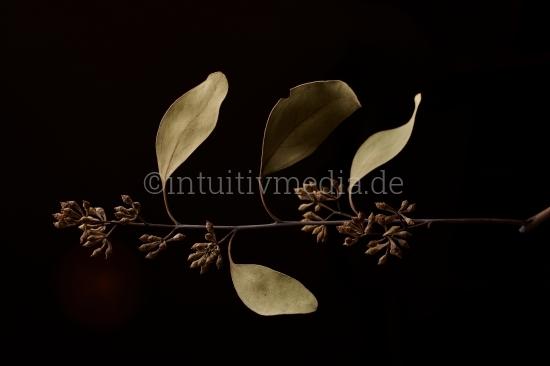 Schöne Pflanze