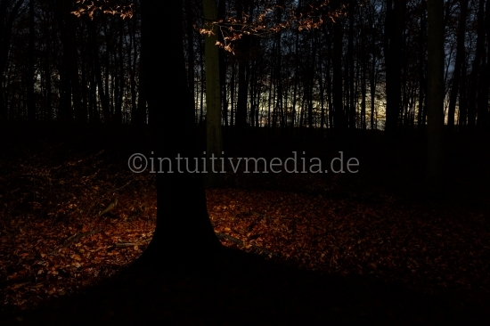Baum Silhouette Nachts