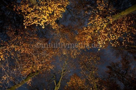 Herbstlaub am Abend