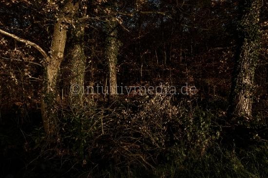 Mysteriöser Wald