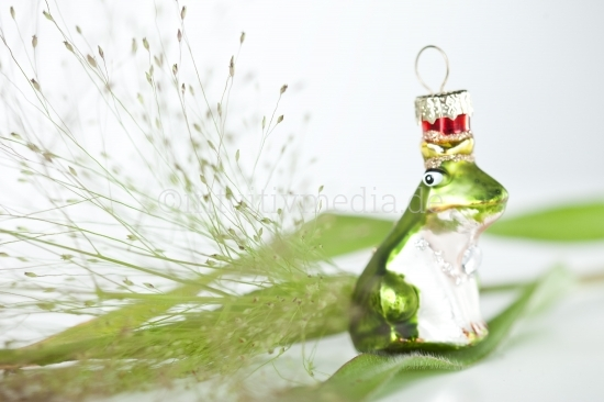 Frosch closeup - Weihnachtsmotive