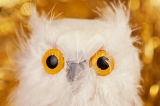 Goldene Eulen Augen