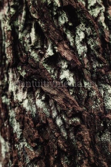 Eichenrinde Struktur Closeup