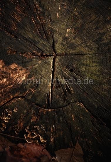 Kreuz auf Baumringe