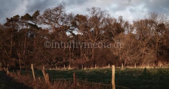 Bäume in der Abendsonne
