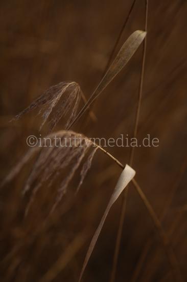Gräser am See