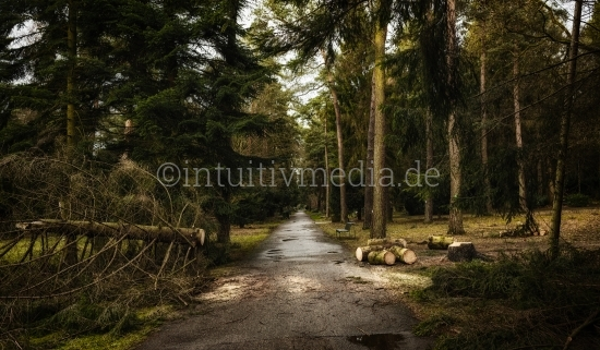 Gefällter Baum im Wald