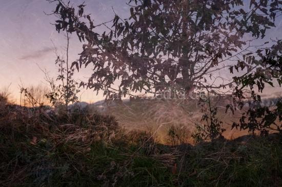 Bäume und Äste - mystische Natur