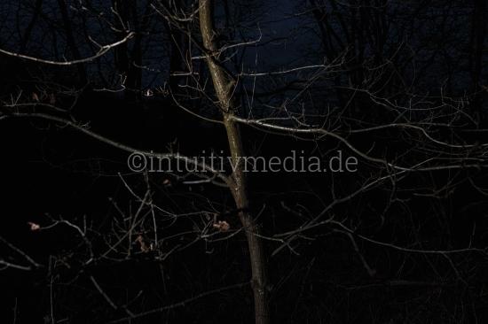 Baum Nachts