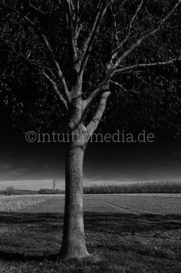 Baum am Feld