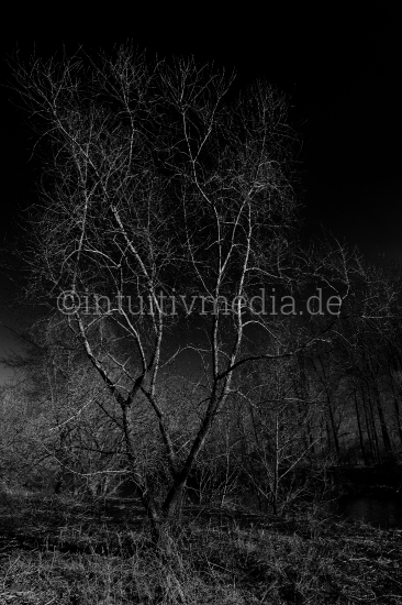 Baum im Dunkel