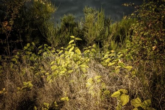 Büsche in der Heide
