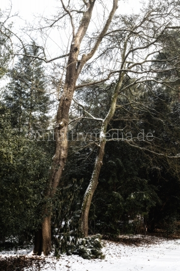 Zwei Bäumen - Winter Landschaft