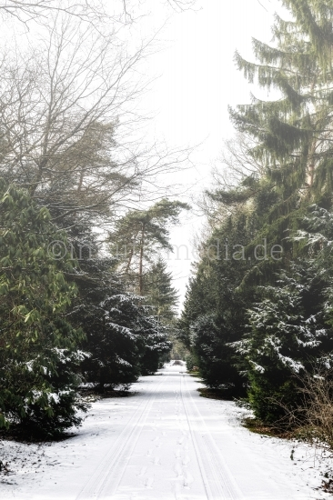 Winter Landschaft mit Bäumen