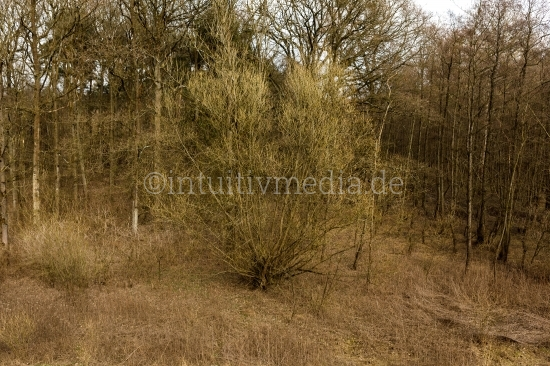 der Baum im vor Frühling