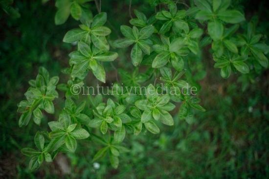 Blüten Closeup - blühende Büsche