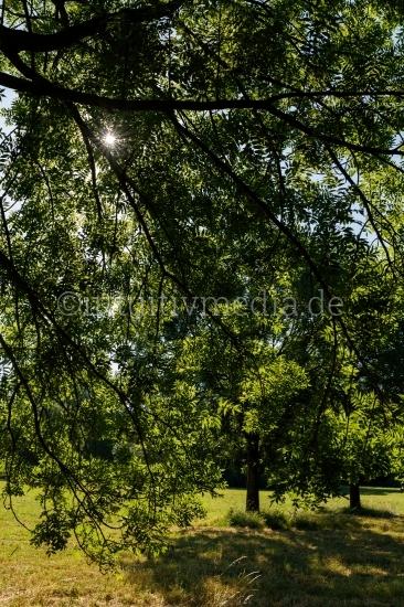 Grüne Bäume - Wilde Natur