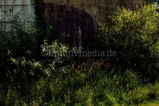 Planzen - Wilde Natur