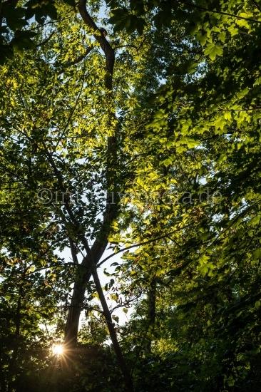 Sonneblitz im Laub