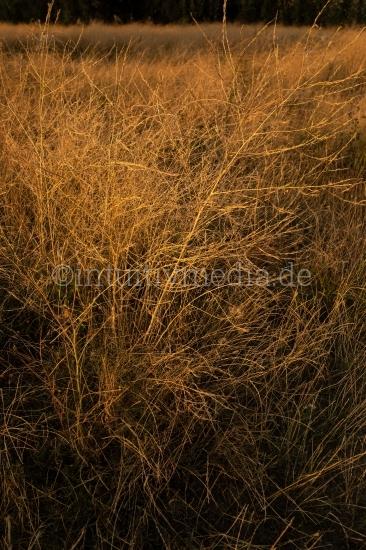 Gräser - Wilde Natur