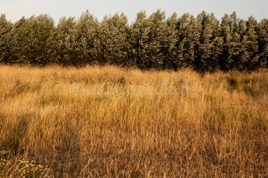 Weiden - Wilde Natur
