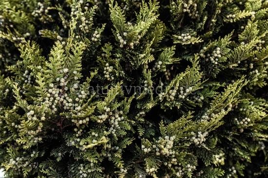 Baum - Textur