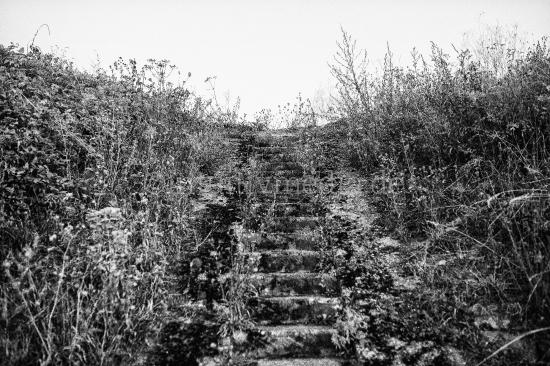 Treppe mit Gräsern