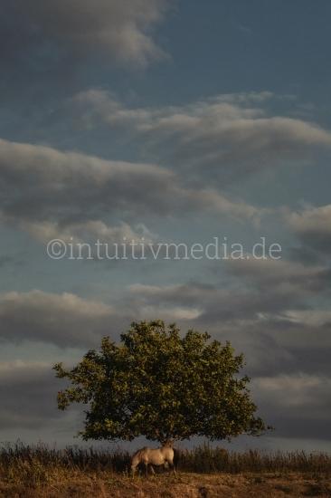 Wildes Pferdmit Baum