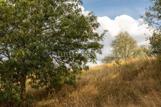 Sommer Landschaft