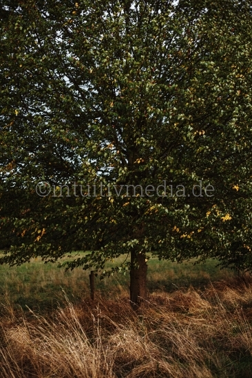 Baum mit gelben Gräsern