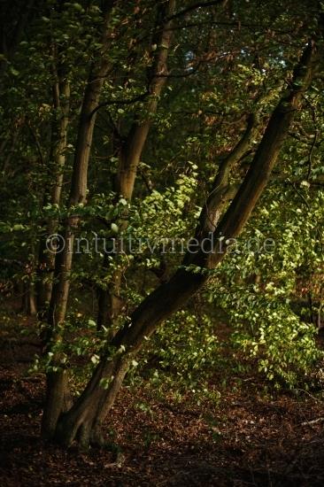 Baume - Wilde Natur