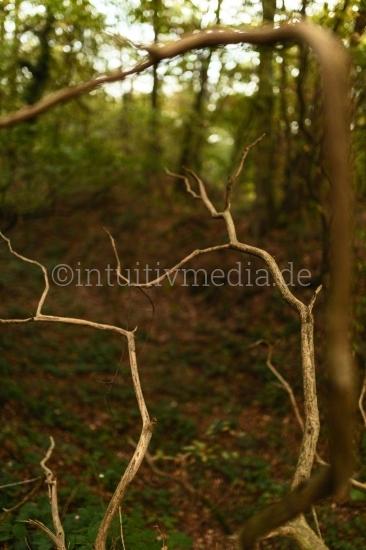 Baum Äste im Wald