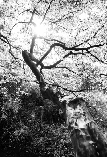 Baum und Äste