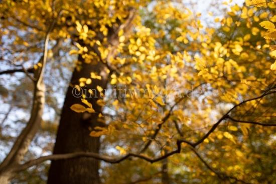 Herbstblatt mit Unschärfe