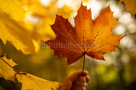 Herbstblatt halten mit Unschärfe