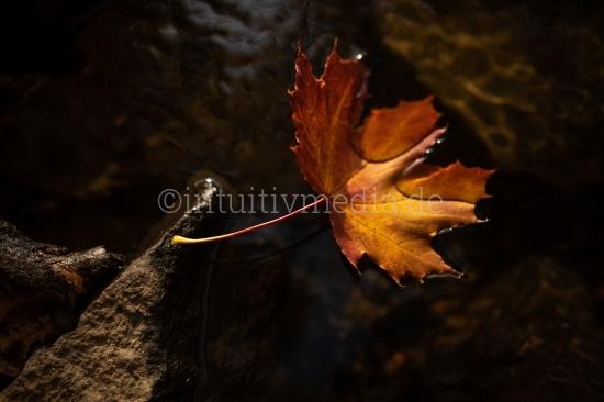 Herbstblatt im Wasser