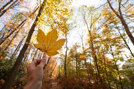 Gelbes Blatt Herbstfarben