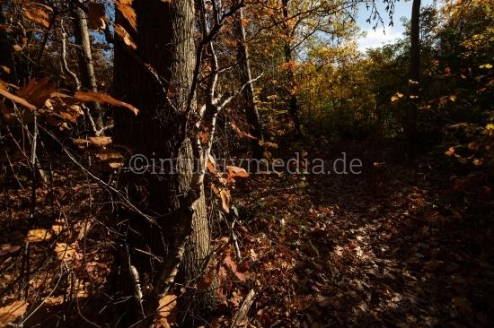 Dramatischer Wald