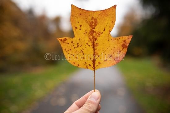 Herbstblatt in der Hand