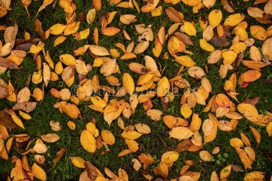 Boden Herbstlaub
